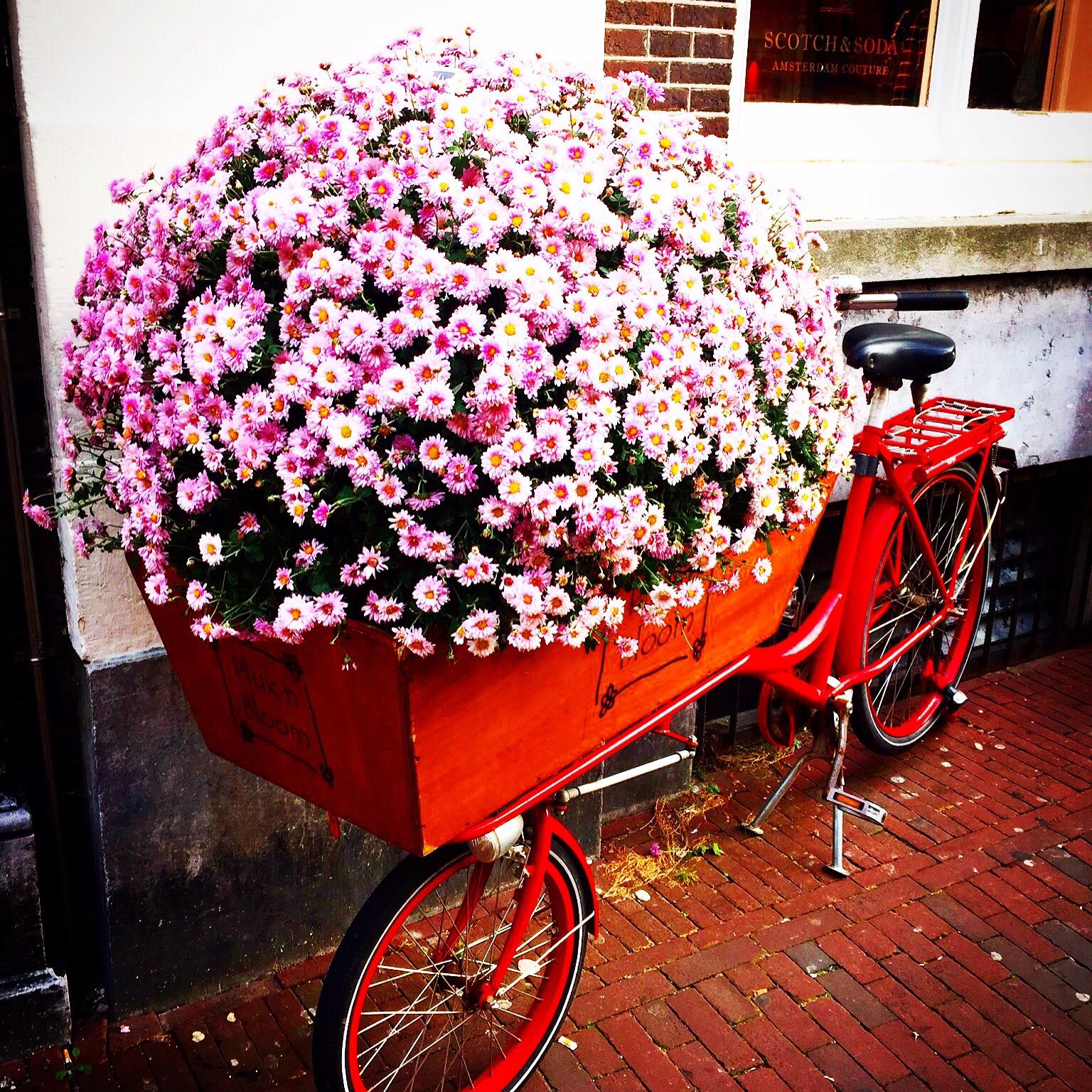 Flowers in a bike basket